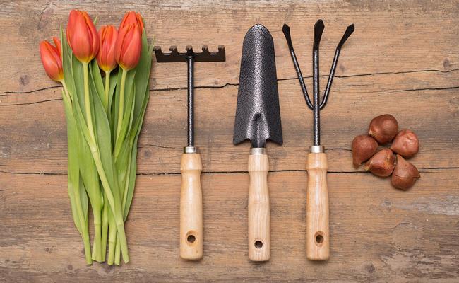 Trois sources d'information sur le jardinage